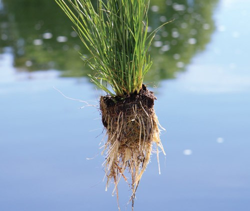 Symbiotic Relationship, root zone, floating treatment wetlands