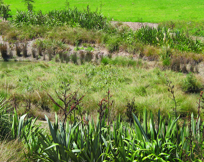 Floating Treatment Wetland, retrofit to forebay, Rosedale rd, Auckland