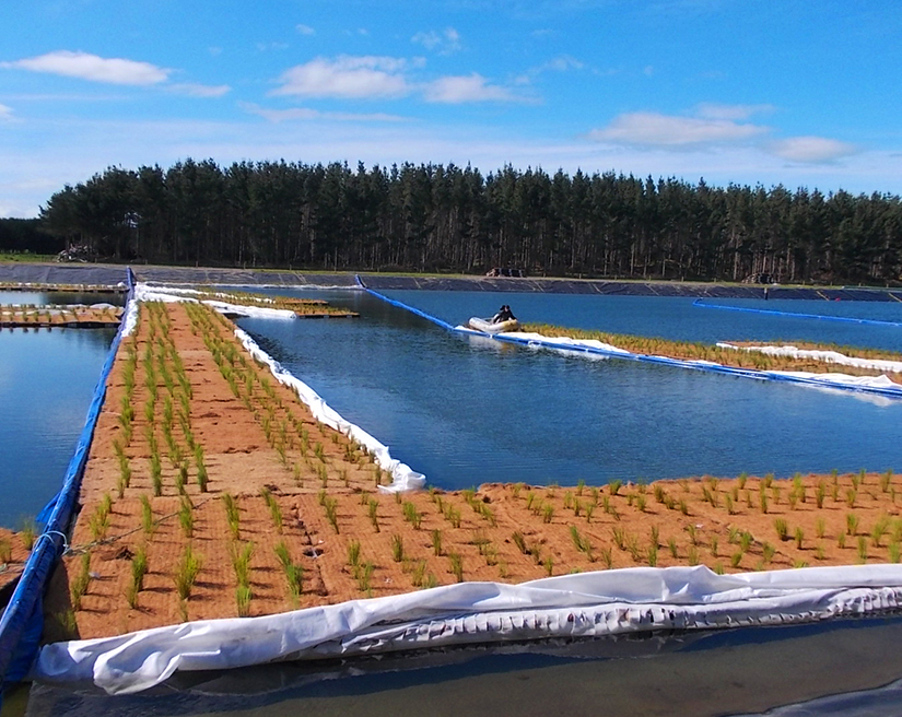 Installation, Floating TReatment Wetlands, Himatangi Beach, Manawatu, NZ