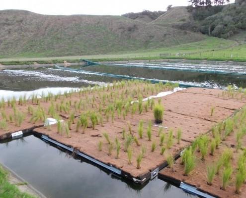 Floating Treatment Wetland, installation at Kimbolton, NZ